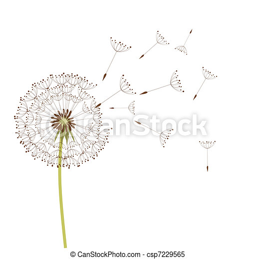 Dandelion - csp7229565