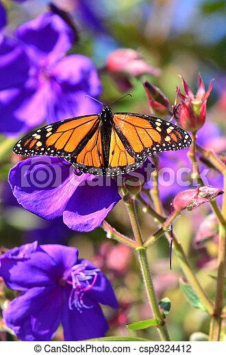dieren, fauna, -, vlinder - csp9324412