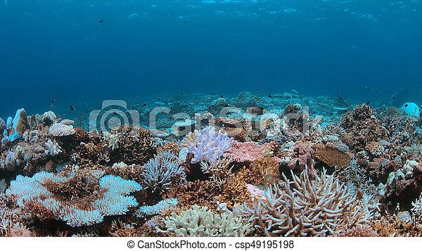 Un arrecife de coral muere - csp49195198