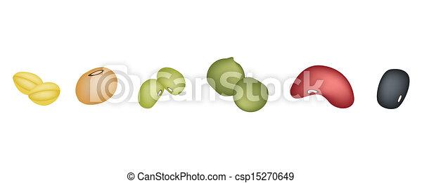 Alubias diferentes seguidas - csp15270649
