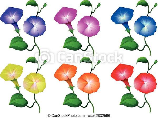 Diferente Flores Colores Gloria Manana Diferente Gloria