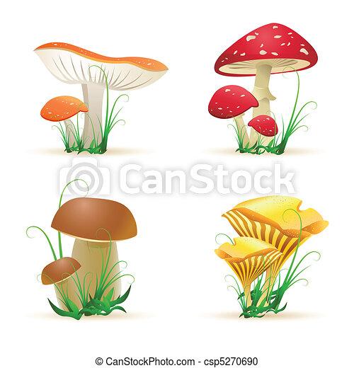 Diferentes árboles de hongos - csp5270690