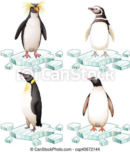 Diferentes tipos de pingüinos sobre hielo - csp40672144