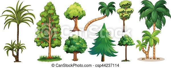 Diferente tipos rboles tipos diferente rboles for Tipos de pinos para jardin fotos