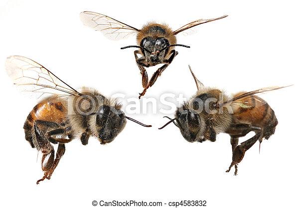 différent, américain nord, abeille, miel, 3, angles - csp4583832