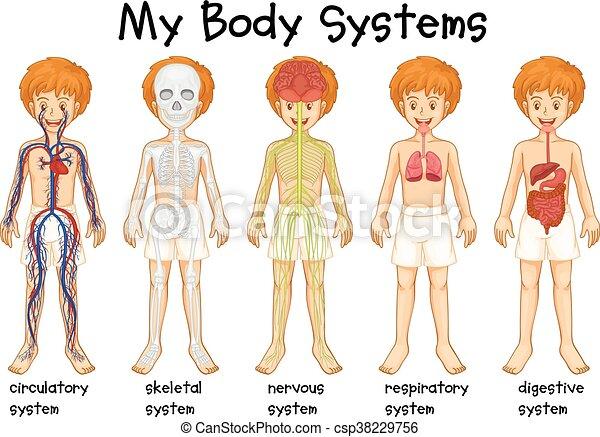 différent, système, humain - csp38229756