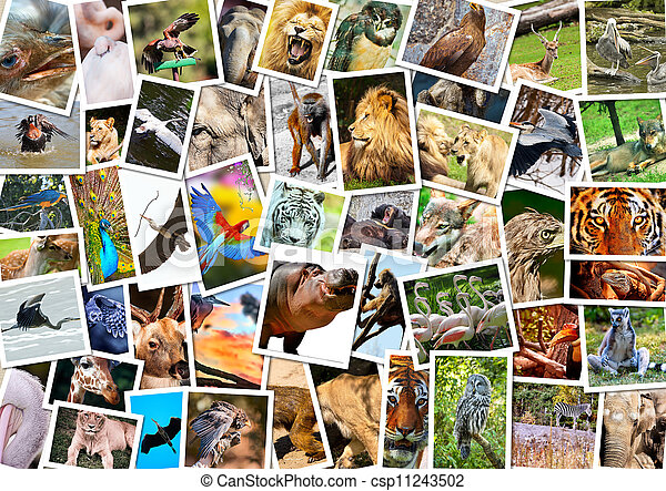 Different animals collage - csp11243502