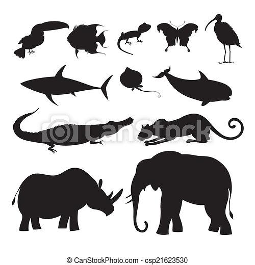 different animals - csp21623530