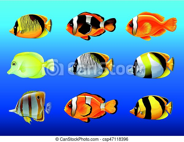 Different Kinds Of Fish Under The Ocean Illustration