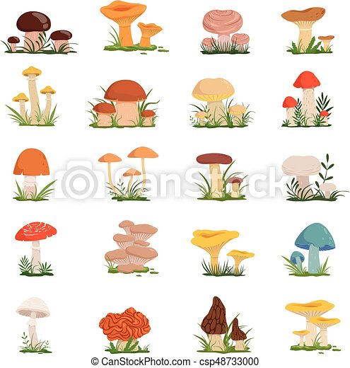 Different mushrooms on green grass. Vector set - csp48733000