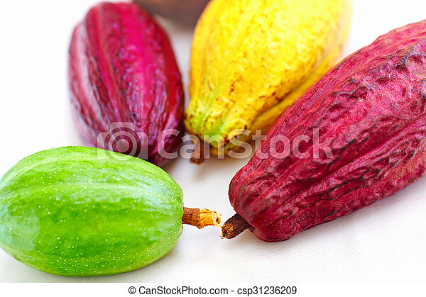 different sorts of colorful cocoa pods - csp31236209