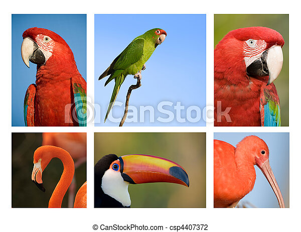 Different tropical birds collection 1. - csp4407372