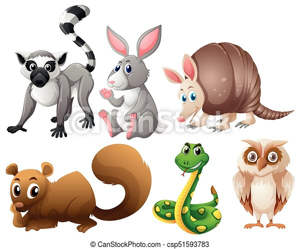 Different types of animals - csp51593783