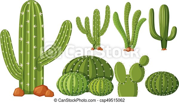 different types of cactus plants illustration