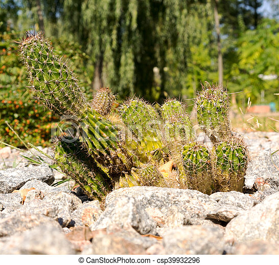 different types of cactus plants plantation house with different