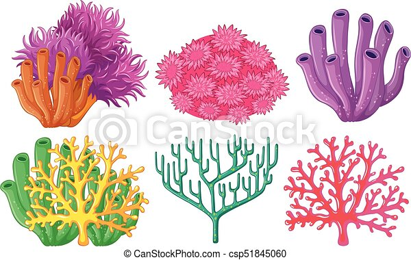 Different types of coral reef illustration different types of coral reef csp51845060 publicscrutiny Images