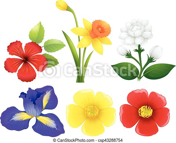 Different types of flowers illustration different types of flowers csp43288754 mightylinksfo