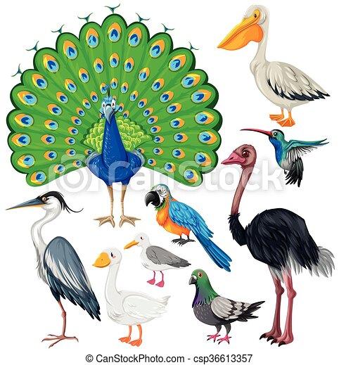 Different types of wild birds illustration for Birdhouse types