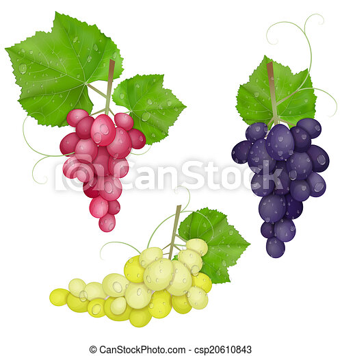different varieties of grapes - csp20610843