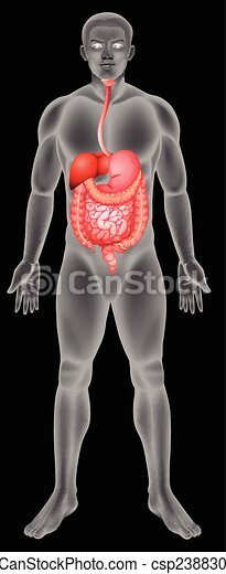 Digestive system - csp23883052