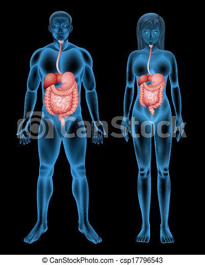 Digestive system - csp17796543