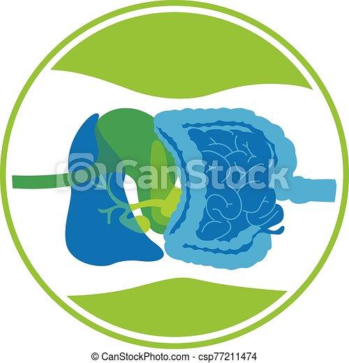 digestive system - csp77211474