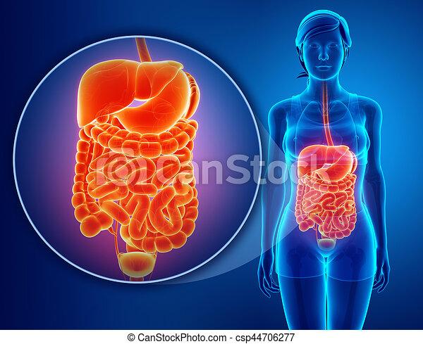 digestive system - csp44706277