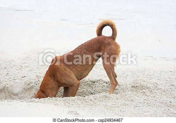 Digging dog - csp24934467