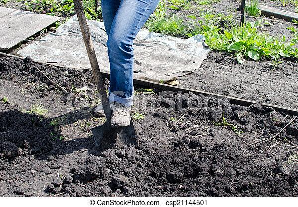 digging - csp21144501