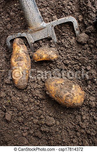 Digging up tatties - csp17814372
