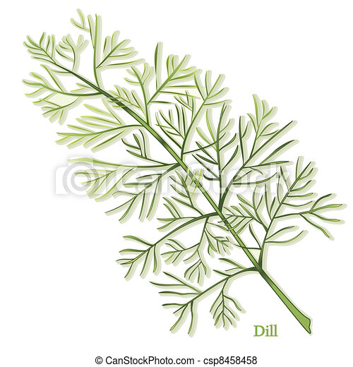 Dill Herb - csp8458458