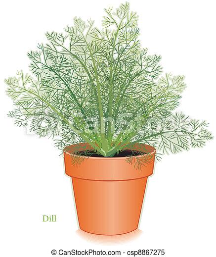 Dill Herb in Clay Flowerpot - csp8867275