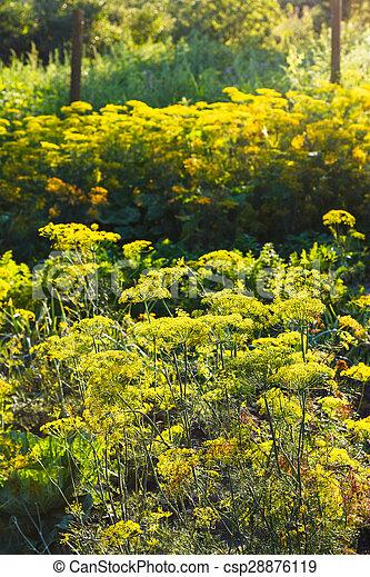 https://comps.canstockphoto.nl/dille-tuin-kruid-gele-bloemen-plaatje_csp28876119.jpg