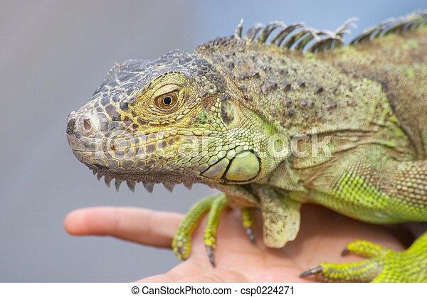 Dinosaur - csp0224271