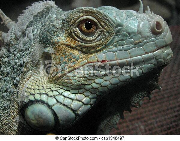 dinosaur - csp1348497