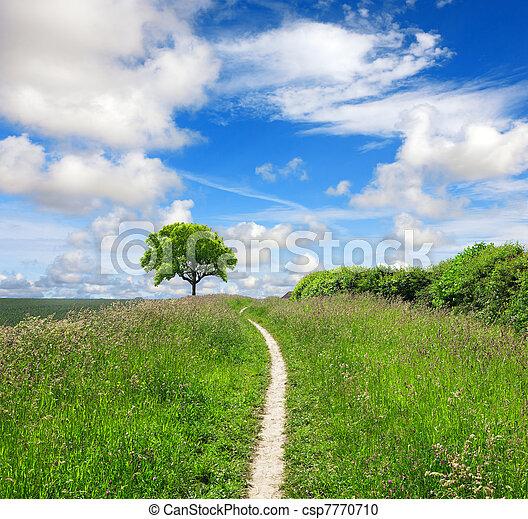 direção, natureza - csp7770710