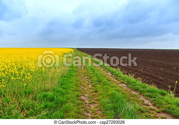 Dirt road and canola fields - csp27293026