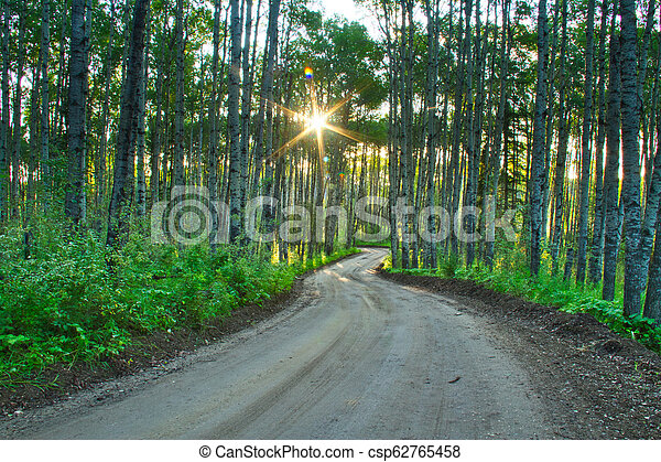 Dirt Road in a Forest - csp62765458