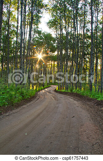Dirt Road in a Forest - csp61757443