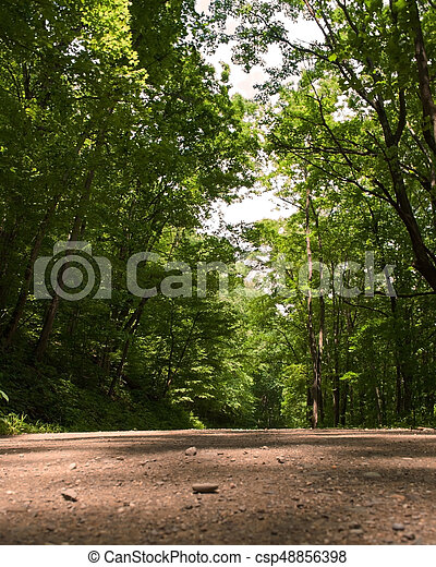 Dirt road in the forest - csp48856398