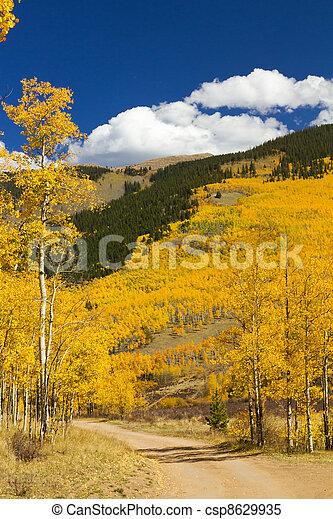 Dirt Road Through Colorado Aspen Forest In Fall - csp8629935
