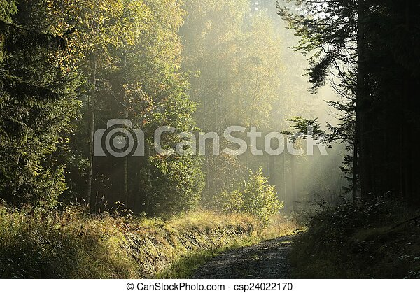Dirt road through the forest - csp24022170