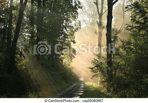 Dirt road through the forest - csp59380887