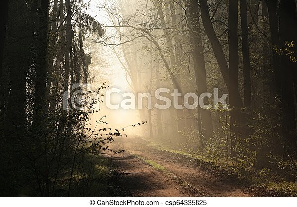 Dirt road through the forest - csp64335825