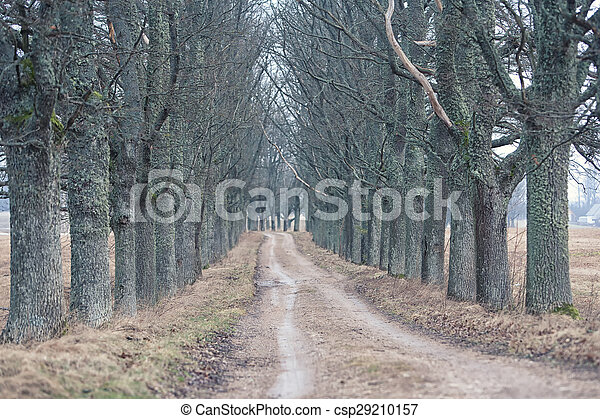 Dirt road through the gloomy forest of oaks - csp29210157