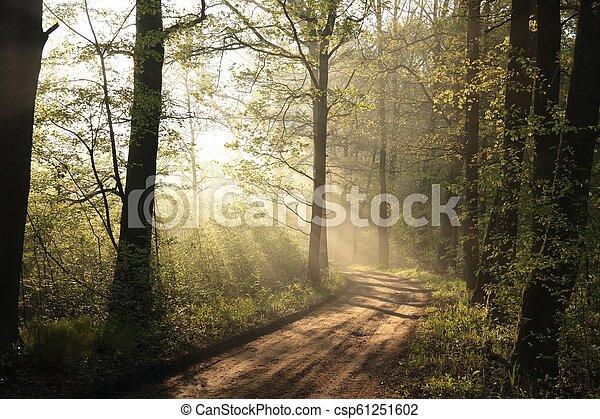 Dirt road through the oak forest - csp61251602