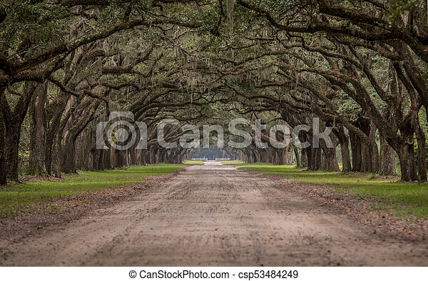 Dirt Road Through Tunnel of Live Oak Trees - csp53484249