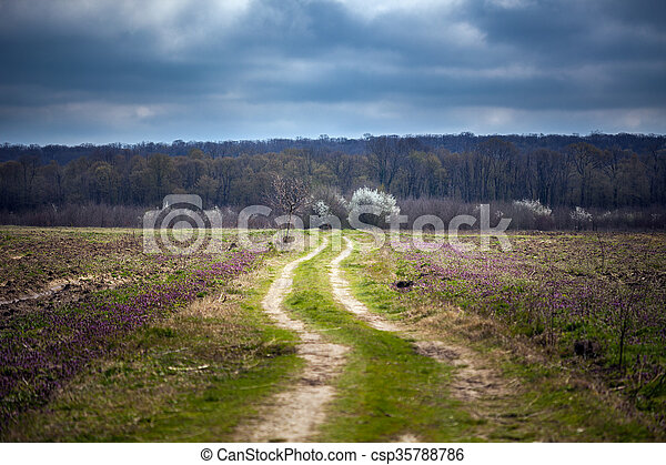 Dirt road to the forest - csp35788786