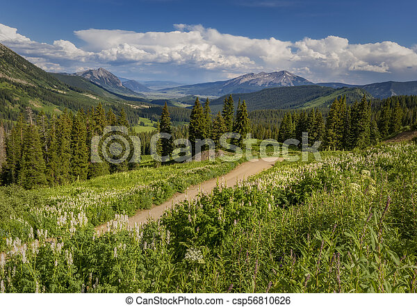 Dirt road winding through the Colorado Mountains in the Summertime - csp56810626