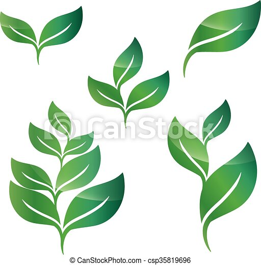disegno, foglie, set, verde, elementi - csp35819696